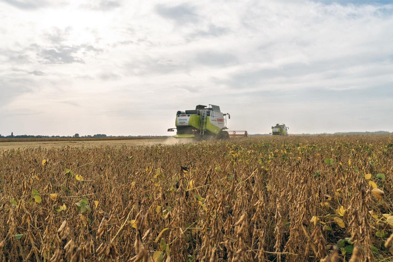 Выращивание сои по нулевой технологии 16